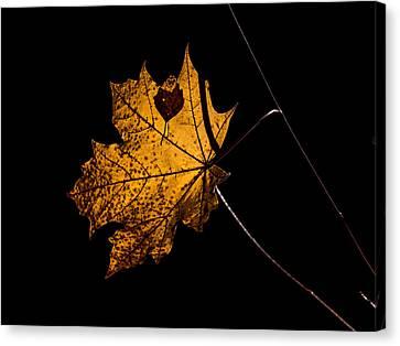 Leaf Leaf Canvas Print by Leif Sohlman