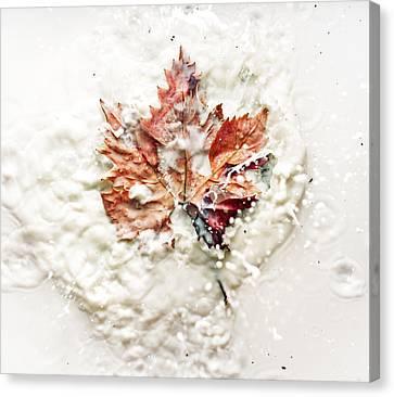Leaf Leap Canvas Print by Ivan Vukelic