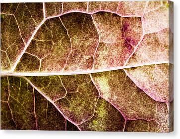 Leaf Lines Canvas Print by Christine Smart