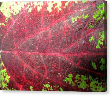 Leaf Me Be Canvas Print by Mike Podhorzer
