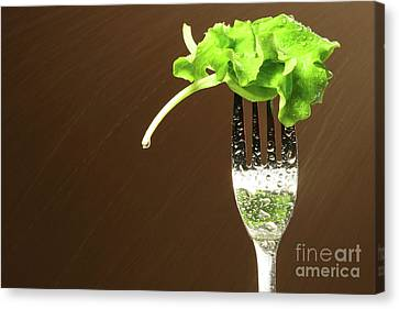 Leaf Of Lettuce On A Fork Canvas Print by Sandra Cunningham