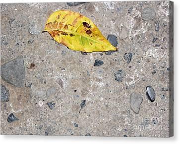 Leaf Of Life Canvas Print