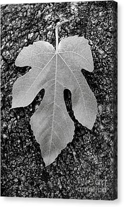 Leaf On Bark Canvas Print