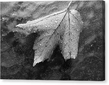 Leaf On Glass Canvas Print