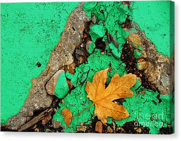 Leaf On Green Cement Canvas Print by Amy Cicconi