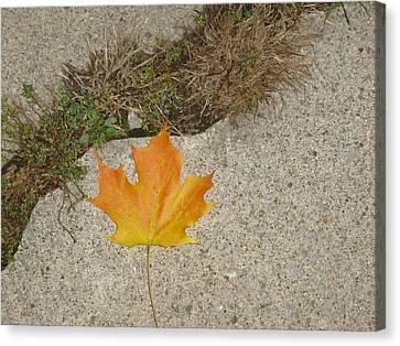 Leaf On Sidewalk Canvas Print by David Fiske