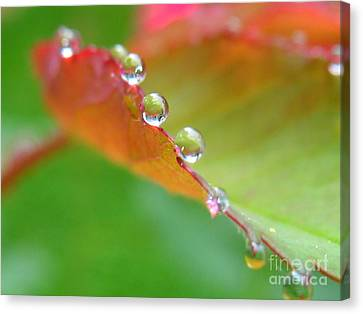 Leaf Pearls Canvas Print