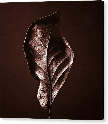 Copper Gold Red Brown Nature Still Life Art Work Photograph Canvas Print