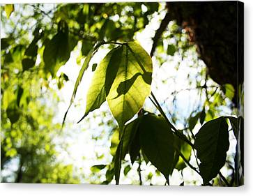 Leaf Space One Canvas Print by Jeremy Ashburn
