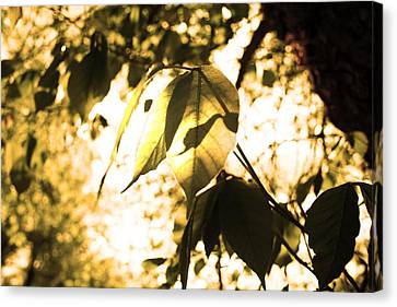 Leaf Space Two Canvas Print by Jeremy Ashburn