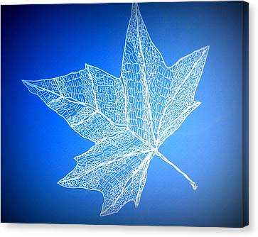 Leaf Study 3 Canvas Print by Cathy Jacobs