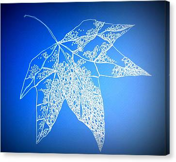 Leaf Study 4 Canvas Print by Cathy Jacobs