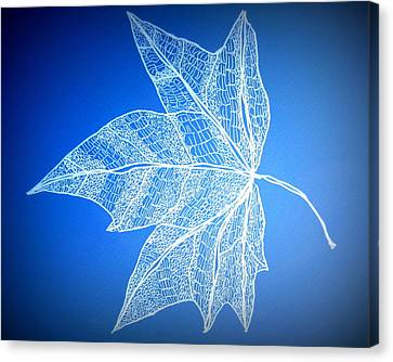 Leaf Study 5 Canvas Print by Cathy Jacobs