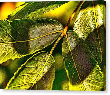 Leaf Texture Canvas Print