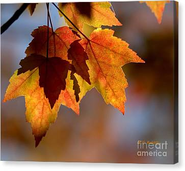 Leaf Upon Leaves Canvas Print by Yvette Radcliffe
