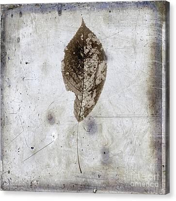 Leaf  Vintage Look Canvas Print by Bernard Jaubert