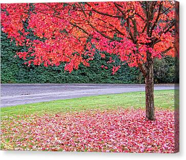Canvas Print featuring the photograph Leaf With Me by Wendy McKennon