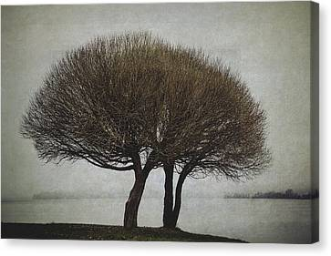 Canvas Print featuring the photograph Leafless Couple by Ari Salmela