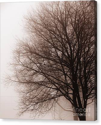 Leafless Tree In Fog Canvas Print