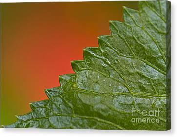 Leafy Canvas Print by Heiko Koehrer-Wagner