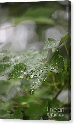 Leafy Raindrops Canvas Print