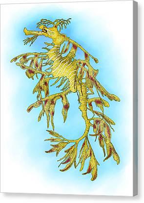 Leafy Sea Dragon Canvas Print