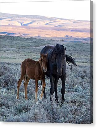 Lean On Me... Ruby And Coal Canvas Print