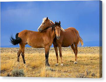 Lean On Me Wild Mustang Canvas Print by Rich Franco