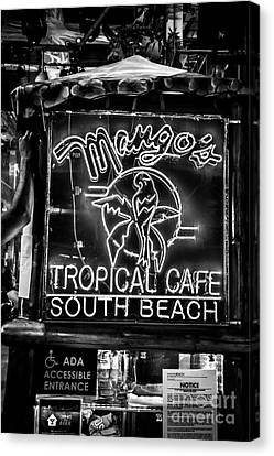 Leaning On Mango's South Beach Miami - Black And White Canvas Print by Ian Monk