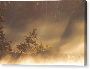 Leaning Tree In Swirling Fog Canvas Print by Larry Ricker