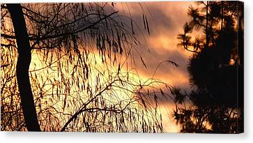 Leaning Willow Silhouette Canvas Print by Will Borden