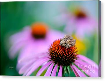 Leap Flower Canvas Print by Lois Bryan