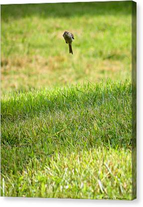 Leaping Bird Canvas Print