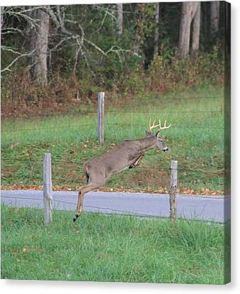 Leaping Buck In Smoky Mountains Canvas Print by Dan Sproul