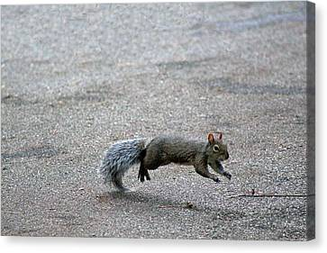 Canvas Print featuring the photograph Leaping Squirrel by Lorna Rogers Photography
