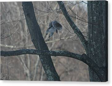 Squirrel Canvas Print - Leaping Squirrel by Neal Eslinger