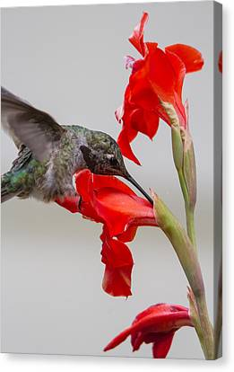 Learning About Flowers Canvas Print