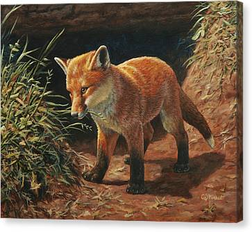 Red Fox Pup - Learning Canvas Print