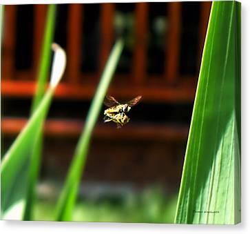Canvas Print featuring the photograph Leave No Bee Behind by Thomas Woolworth