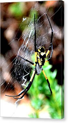 Leave The Writing To The Spider  Canvas Print