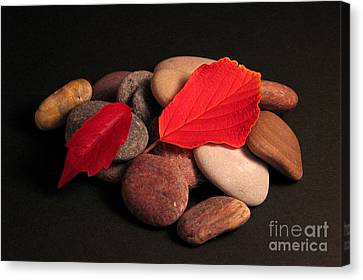 Leaves And Stones Canvas Print by Art Photography
