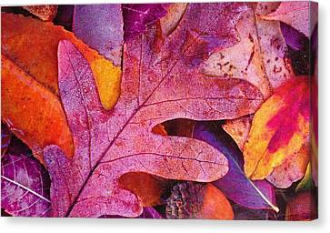 Leaves Canvas Print by Anne-Elizabeth Whiteway