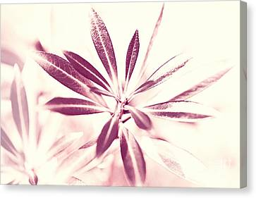 Leaves Dancing In The Sunlight Abstract Canvas Print by Natalie Kinnear