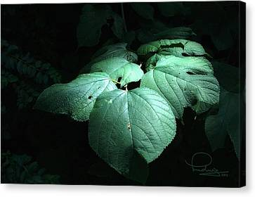 Canvas Print featuring the photograph Leaves In A Patch Of Sunlight by Ludwig Keck