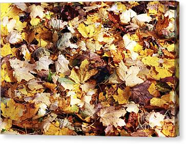 Leaves Canvas Print by John Rizzuto