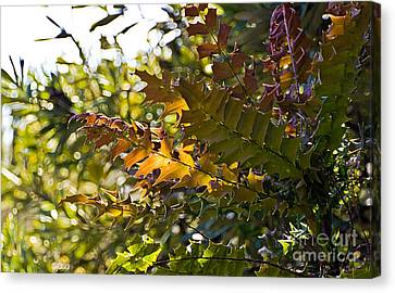 Leaves Canvas Print by Kate Brown