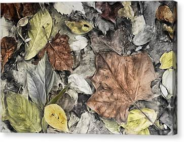 Leaves Canvas Print by Mick Burkey