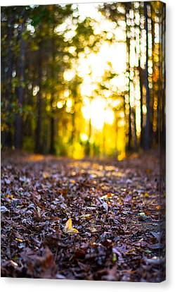 Leaves On A Forest Trail Canvas Print by Parker Cunningham