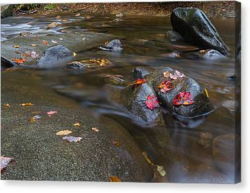 Leaves On The River Path Canvas Print by Andres Leon