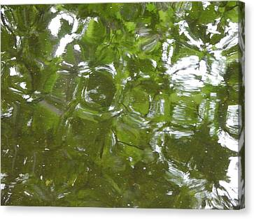 Leaves Reflected Canvas Print